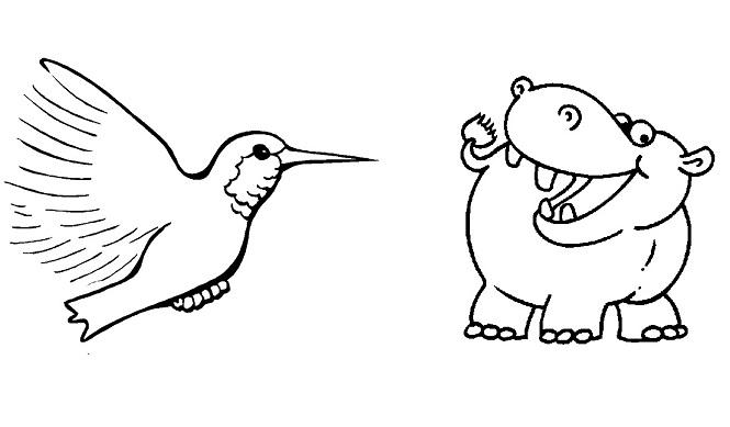 hipopotamo_colibri